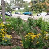 Grand Marais Rain Garden Project